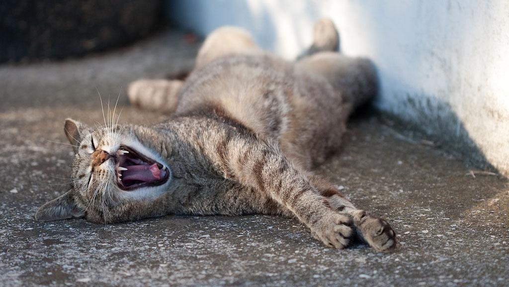 System für Faule CAT_2